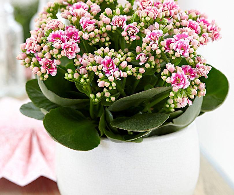 Offrez-vous une fleur pour la fête des mères
